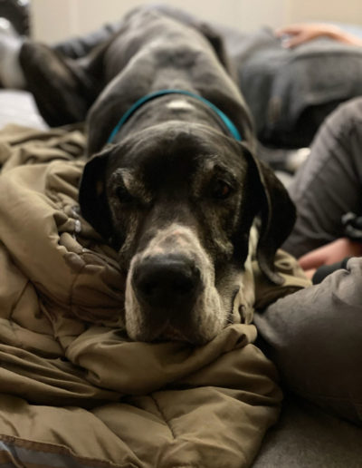 Spike - One Dane at a Time