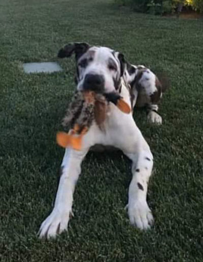 Cash - One Dane at a Time