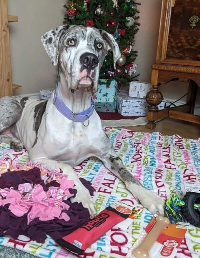 Charlie - One Dane at a Time