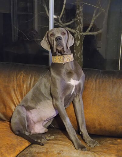 Enzo - One Dane at a Time