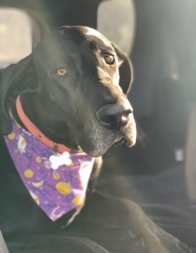 Grace - One Dane at a Time
