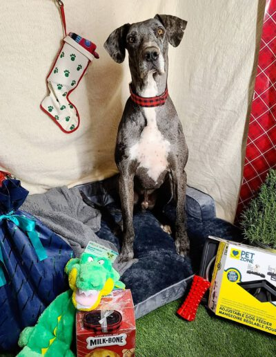 Gunner - One Dane at a Time