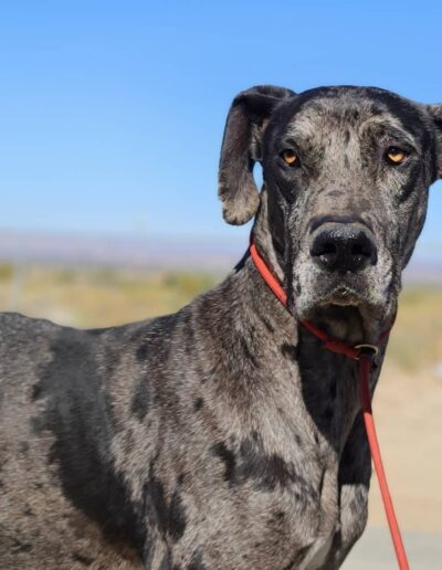 Hunter - One Dane at a Time