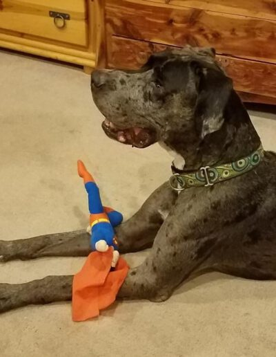 Zeus - One Dane at a Time